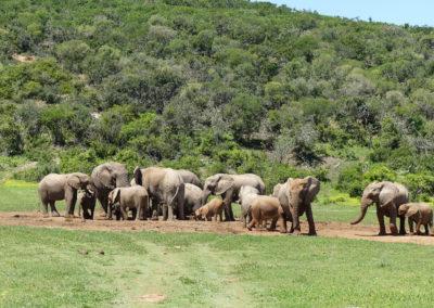 39 on Church - Addo Elephant National Park